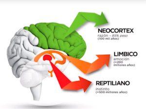 cerebro reptiliano, limbico, neocórtex